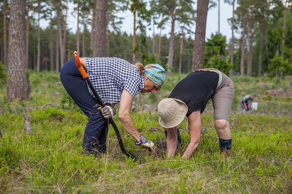 metsa istutamine, talgupäev, eesti metsaühistu